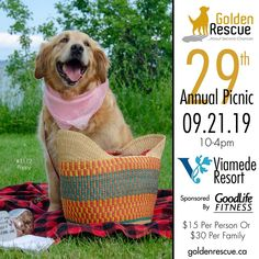 Can you lend a paw at the picnic? Volunteers, Life Is Good, Picnic, Adoption, Link, Fitness, Beautiful, Foster Care Adoption, Life Is Beautiful