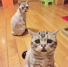 Gatinha mais triste do mundo vai derreter você de tanta fofura #gatos #cats #taofeminino - taofeminino.com.br