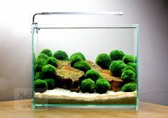 Marimo are the *easiest* way to add a splash of green to any bowl/aquarium!