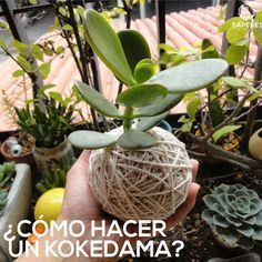 Unique Hanging Kokedama Ball Ideas for Hanging Garden Plants selber machen ball Succulents Garden, Garden Plants, Indoor Plants, House Plants, Air Plants, Cactus Plants, Hanging Herb Gardens, Hanging Herbs, Hanging Planters