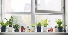 5 Reasons We Love Plants: A Love Letter - The Sill - New York Houseplant Delivery & Plant Design Services