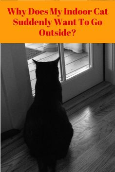 Does your indoor cat suddenly want to go out?  Here are some reasons why and tips to enhance his indoor environment #cats #catbehavior