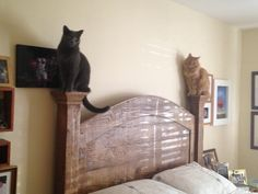 My cats are actually only 3% feline and 97% gargoyle. - Imgur