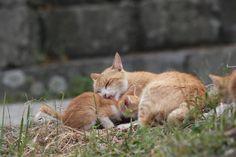 Аосима-японский остров кошек | Life on Photo