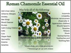 Roman chamomile oil Chamomile Oil, Chamomile Essential Oil, Roman Chamomile, Yl Oils, Muscle Spasms, Diaper Rash, Liver Detox, Young Living Essential Oils, Allergies