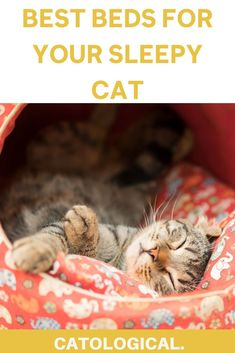 Choosing the right cat bed for your favorite feline is critical because she will spend a lot of time there, just as we spend time in ours.You want the bed to be as comfortable and relaxing as possible, and to suit both your household needs and her sleepy time needs. #cats #catcare #catfacts #catapartment #catbeds