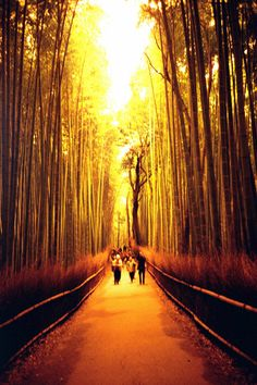 bamboo thicket in Kyoto