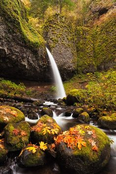 Ponytail Falls, Oregon: Its crazy how I'm laying in my room while somewhere else in the world something like this is happening. True beauty.