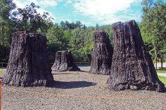 Fossil Trees, Ipolytarnóc, Hungary -  bükkábrányi ősfák vagy bükki ősfák az a 7,2–7,6 millió éves, tizenhat mocsárciprusból álló erdőmaradvány, amelyet 2007 júliusában találtak a Borsod-Abaúj-Zemplén megyei Bükkábrány melletti lignitbányában, 60 méteres mélységben.