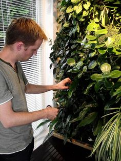 Create an Indoor Living Wall of Plants