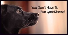 Dr Patricia Jordan forwarded an interesting email to me and I'd like to share it with you. But first, I want to take a look at what conventional veterinarians think is the cause of Lyme disease in dogs. So I went to PetMD, one of the largest and most used veterinary sites in the world... Continue Reading