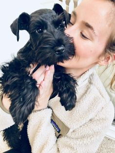 Ranked as one of the most popular dog breeds in the world, the Miniature Schnauzer is a cute little square faced furry coat. Schnauzer Grooming, Schnauzer Breed, Standard Schnauzer, Miniature Schnauzer Puppies, Schnauzers, Giant Schnauzer, Fox Terriers, Miniature Schnauzer Black, Black Mini Schnauzer