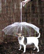 Pet Umbrella (Dog Umbrella) Keeps your Pet Dry and Comfortable in Rain - Novelty Gag Gift Umbrella Cartoon, Dog Umbrella, Outside Umbrellas, Chinese Dog, Cheap Pets, Dog Raincoat, Dog Collars & Leashes, Cool Pets, Dog Art