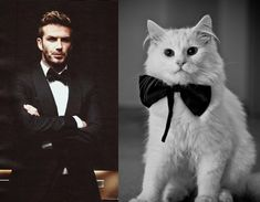 12 Hot Men And Their Feline Counterparts  http://www.buzzfeed.com/lilis2/12-hot-men-and-their-feline-counterparts