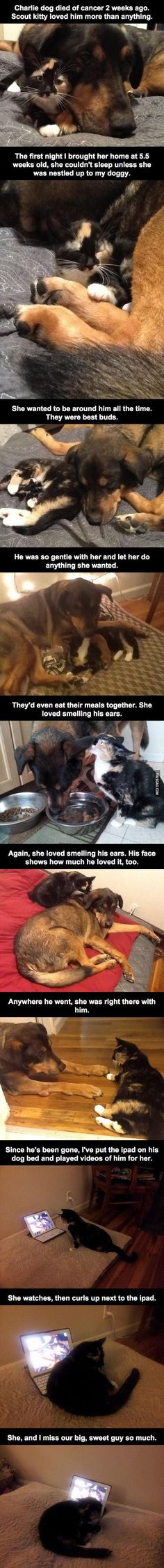 This Dog died of Cancer. The reaction of his loving Kitty friend is Heartbreaking. - 9GAG