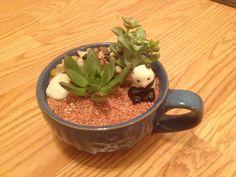 Repurposed tea pot succulents