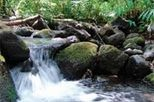 Oahu Rainforest Hiking Adventure