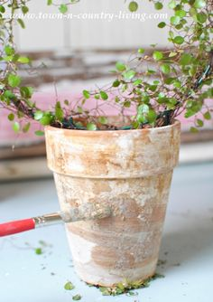 How to Make Moss Covered Garden Pots - Town & Country Living How to grow moss on a clay pot Garden Crafts, Garden Projects, Container Plants, Container Gardening, Plant Containers, Organic Gardening, Gardening Tips, Indoor Gardening, Growing Moss