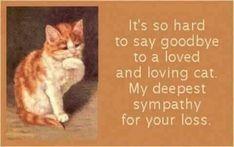 Pet Grief, Hard To Say Goodbye, Pet Remembrance, Sad Cat, Deepest Sympathy, Pet Loss, Condolences, Rainbow Bridge, Sympathy Cards