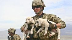 Veterans Suffering From PTSD Are Being Helped By Dogs. Lives Are Being Saved!