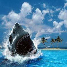Sharks patrol these waters by DJ Ing - Neil Ingham on SoundCloud