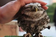 A Cute Owl..  And it's so tiny!!