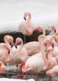 Cute birds ~ Stunning nature