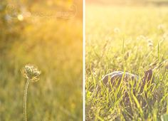 Beautiful photos and some awesome White Balance Tips from White Balance, Green Photo, Green Grass, Cool Photos, Spring, Awesome, Tips, Flowers, Plants