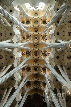 © John Kennan La Sagrada Familia by Antoni Gaudi, Barcelona, Spain Classical Architecture, Amazing Architecture, Art And Architecture, Historic Architecture, Antoni Gaudi, Urban, Beautiful Buildings, Ceilings, Famous Buildings