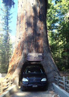West Coast Road Trip 02 - San Luis Obispo to the Trees of Mystery
