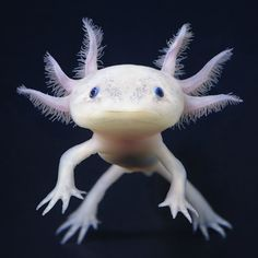 Mexican salamander (or Axolotl). Only if it was walking on ground and was half a meter tall. Smiles a lot, jumps high like a frog and goes to fury mode when attacking. After that it is back to peaceful self.