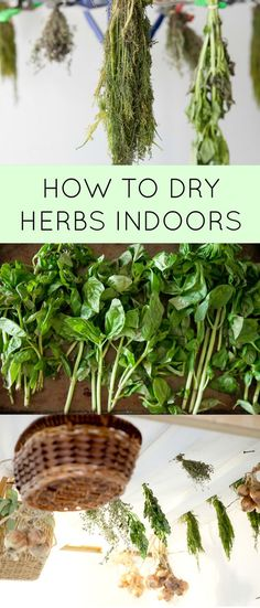 How to dry herbs indoors.  By doing this you can make your own dried oregano, basil, rosemary, parsley, thyme and more for recipes!