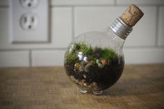 Recycled Lightbulb Terrarium