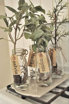 Herbs (ready for planting) in recycled glass, eco-friendly wedding favors