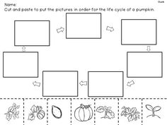 Worksheets Life Cycle Of A Pumpkin Worksheet life cycle of a pumpkin mini booklet free printable decodable flow map