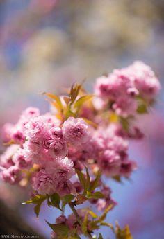 Nikon, Facebook, Landscape, Plants, Nature, Scenery, Plant, Corner Landscaping, Planets