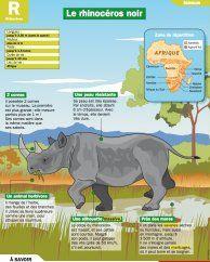 Le rhinocéros noir - Mon Quotidien, le seul site d'information quotidienne pour les 10 - 14 ans !