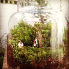 Our first terrarium