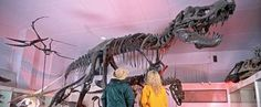 The most complete Tyrannosaurus rex ever discovered, Sue was found in 1990 in northwest South Dakota.