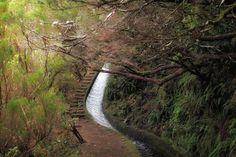 Die Wanderung entlang der Rosmarin-Levada startet am gleichen Ort wie die zu den 25 Quellen, ist aber weniger bekannt. Eine feine Strecke durch Madeiras tolles Grün!