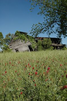 ben-hill-county-ga-bells-cabin-road-farmhouse-decrepit-dilapidated-falling-red-crimson-clover-field-abandoned-southern-decay-pictures-photo-copyright-brian-brown-vanishing-south-georgia.jpg 333×500 pixels