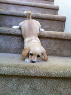 Stairs are hard.