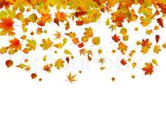 Hintergrund der Blätter im Herbst   Stock-Vektor   Colourbox on Colourbox
