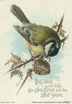 Vintage PostCards-Bird
