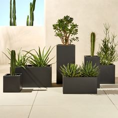 X blox low galvanized charcoal planter. Charcoal planter squares up sleek and modern. Protected for indoor and outdoor settings, matte-finished galvanized steel plays up refined industrial to dramatic effect. Galvanized Planters, Black Planters, Modern Planters, Garden Planters, Galvanized Steel, Tall Outdoor Planters, Resin Planters, Planters Around Pool, Cheap Planters
