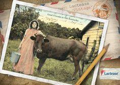 Una ragazza sorridente che sta per mungere il #latte e una placida mucca rappresentano la serena vita di campagna dell'Old Kentucky. Ecco la cartolina di #LacteaseVintage!