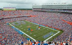 The Swamp- It's Great to be a Florida Gator!