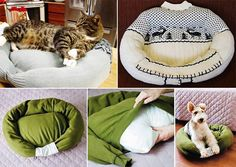 Dog or Cat bed 1. Get Sweater 2. Sew Neck Shut and from arm pit to arm pit across 3. Stuff sweater 4. put pillow 5. Sew sleeves together