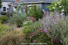 Image result for california native meadow front yard