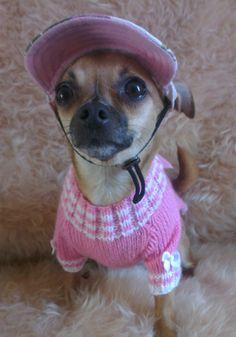 Ahh Chihuahua!
